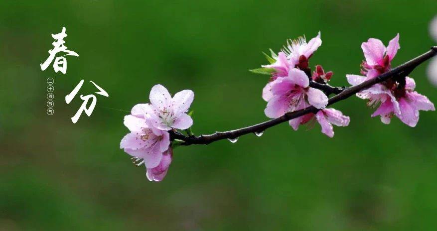 【今日春分】没有一个春天不会来临